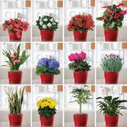 12-Month Plant Club