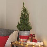 Holiday Spruce It Up Tree Thumb