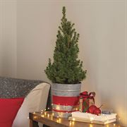 Holiday Spruce It Up Tree