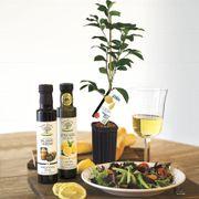 Zesty Lemon Lovers Tree Gift Set