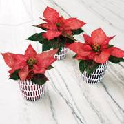 Pretty in Poinsettia Gift Set