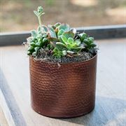 Succulent Garden in Hammered Copper