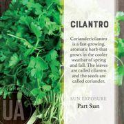 Cilantro Herb Garden Grow Kit