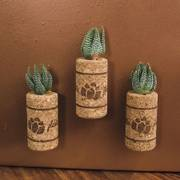 Succulent Gift in Magnetic Wine Cork - Set of 3