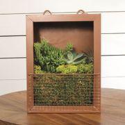 Succulent Plant Portrait - Bronze Tin