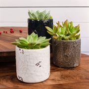 Succulent Gift in Distressed Dolomite - Set of 12