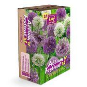Allium Garden Box Mix Alternate Image 1