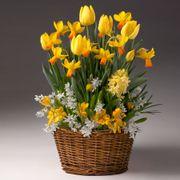 Spectacular Spring Bulb Garden
