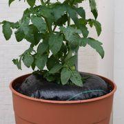 TreeDiaper® 16-inch