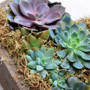 Sweetheart Succulent Planter