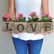 LOVE Pink Kalanchoe Plants