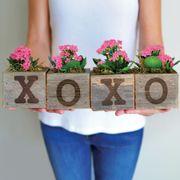 XOXO Pink Kalanchoe Plants