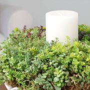 10-inch Succulent Wreath