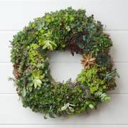 14-inch Succulent Wreath