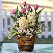Bountiful Beauty Bulb Garden