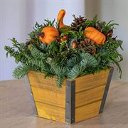 Harvest Evergreen Gift