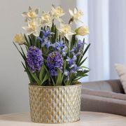 May Flowers Bulb Garden Thumb