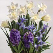 May Flowers Bulb Garden Alternate Image 1