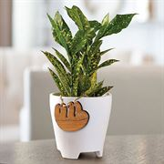 Gold Dust Croton Houseplant with Sloth