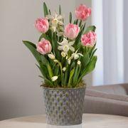 Spring Kiss Bulb Garden Thumb