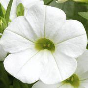 Blooming Block Kwik Kombos™ Spring Showers™ Alternate Image 1