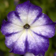 Blooming Block Kwik Kombos™ Spring Showers™ Alternate Image 2