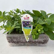 Blooming Block Kwik Kombos™ Spring Showers™ Alternate Image 4