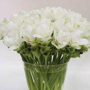 Curcuma White Jasmine Alternate Image 1