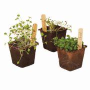 Seed Starter Trio - Green Goodness Alternate Image 1