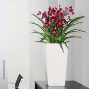 Lechuza White 22 inch All in One Cubico Self Watering Planter