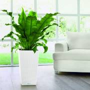 Lechuza White 30 inch All in One Cube Cottage Self Watering Planter