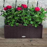 Lechuza Mocha 20 inch All in One Balconera Cottage Self Watering Planter