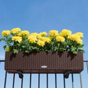 Lechuza Mocha 32 inch All in One Balconera Cottage Self Watering Planter