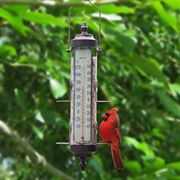 Bird Feeder/Thermometer