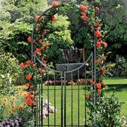 Fleur de Lis Arbor with Gate