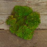 Preserved Mood Moss - 120 cu. In.