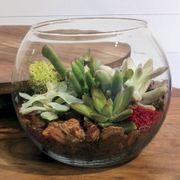 Succulent Terrarium Bowl