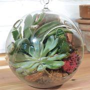 Hanging Globe Succulent Garden