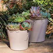 Succulent Mixed Garden in Taupe - 6-Inch