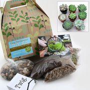 Do-it-Yourself Succulent Terrarium Kit with 5 Plants