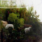 Pastoral Landscape Terrarium