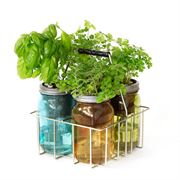 Cocktail Herbs Garden Jar - 2PK