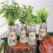 Eco-Planter - Flat Leaf Parsley