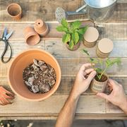 Kitchen Essentials Seed Starter Kit - 3PK