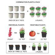 Juliet Hybrid Tomato Plants (pack of 3)