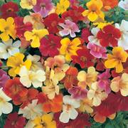 Magic Monkey Flower Mix (pack of 3)
