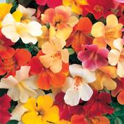 Magic Monkey Flower Mix