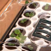 Park's Original Bio Dome Seed-Starting System Alternate Image 3