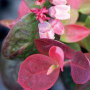 Bushel and Berry® Blueberry Peach Sorbet® Alternate Image 4