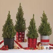 Holiday Spruce It Up Tree Alternate Image 1